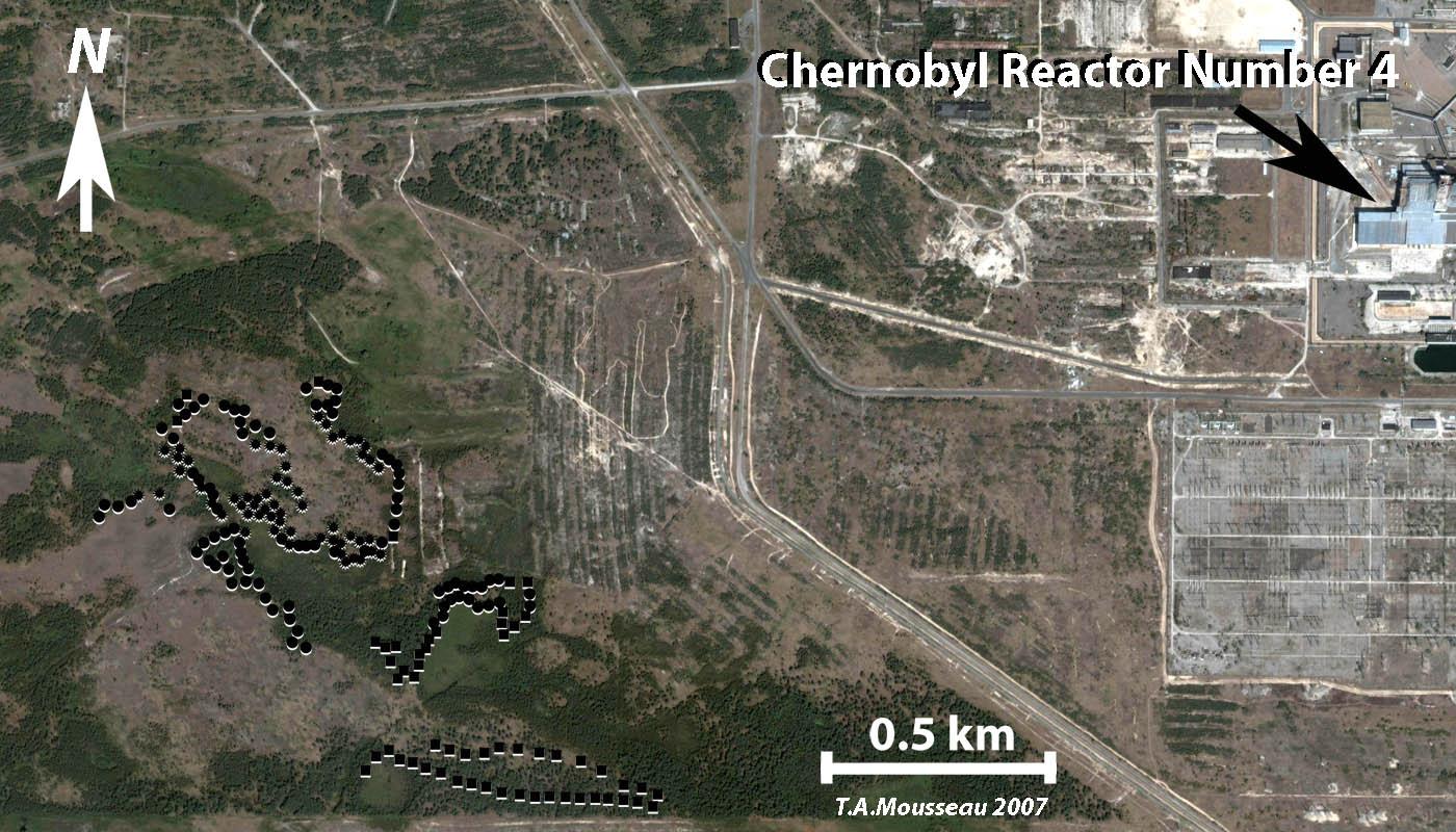 essay chernobyl essay