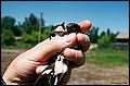 pisky-birds2.jpg